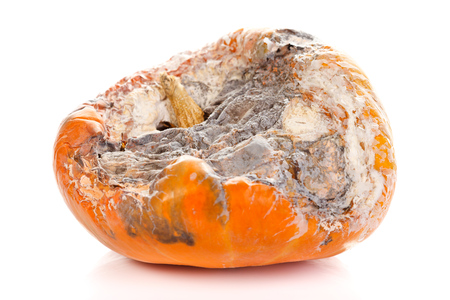 Closeup picture of a rotten pumpkin. Isolated on white background.  photo