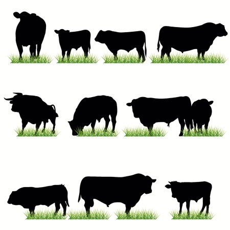 cow illustration: Bulls silhouettes set