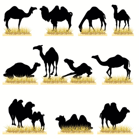 cartoon camel: Camels silhouettes set Illustration