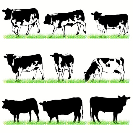 calves: Cows and bulls set Illustration