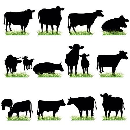 ganado: Conjunto de siluetas de vacas Vectores