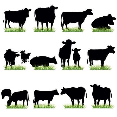 domestic cattle: Cows silhouettes set