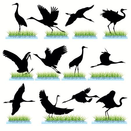 crane bird: Cranes silhouettes set