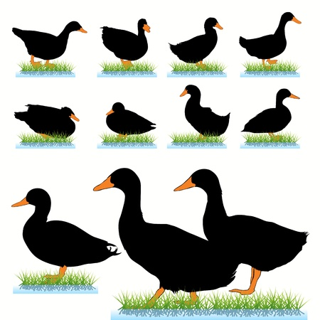 Ducks silhouettes set Vector