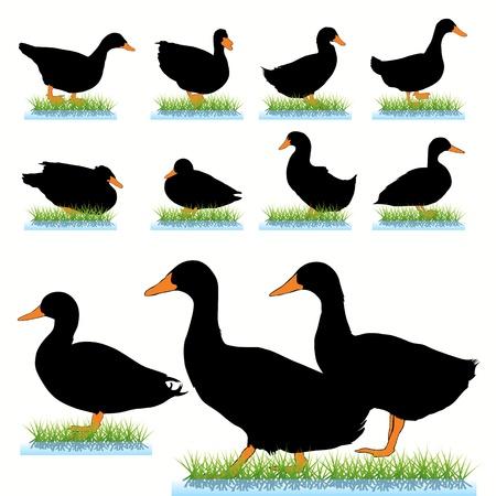 Ducks silhouettes set Vector