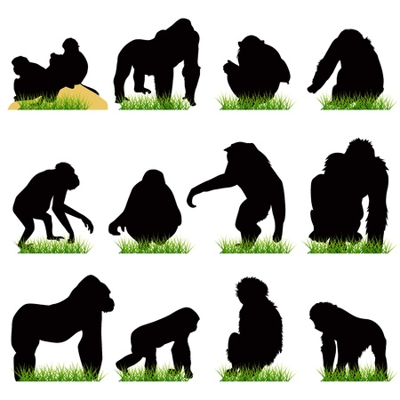 primates: Monkeys silhouettes set
