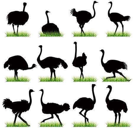 Ostrich silhouettes seto
