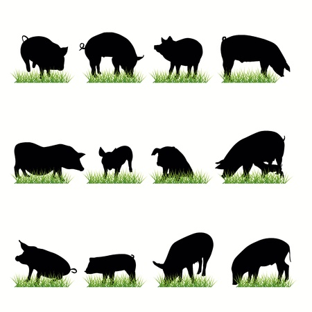 Pigs silhouettes setp Vector