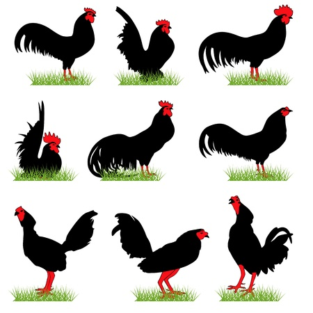 Roosters silhouettes set Stock Vector - 9903928