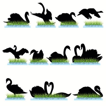Conjunto de siluetas de cisnes Foto de archivo - 9903998