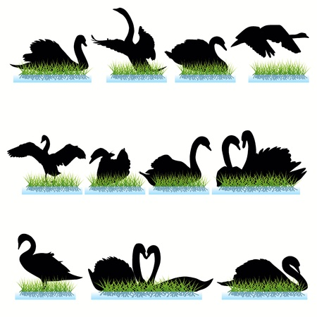 swimming bird: Swans silhouettes set