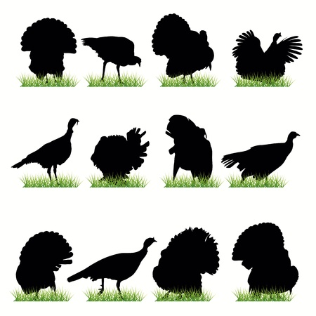 utilization: Turkey silhouettes set