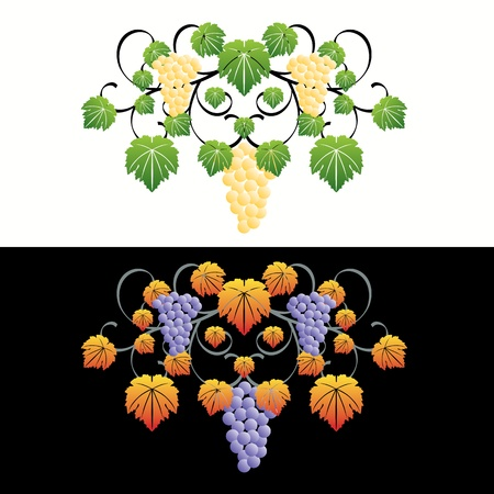 Decorative wine elements set Stock Vector - 9903942