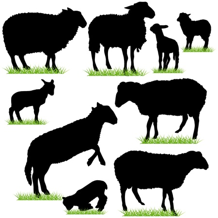 oveja: Siluetas de oveja y cordero Set
