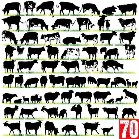 lamb: Bovini da latte Silhouettes Set Vettoriali