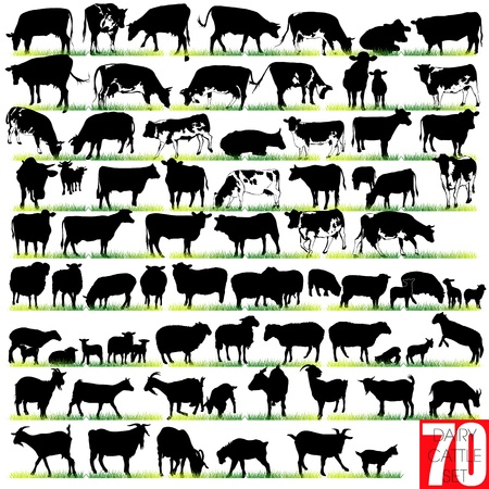dairy cow: Dairy Cattle Silhouettes Set