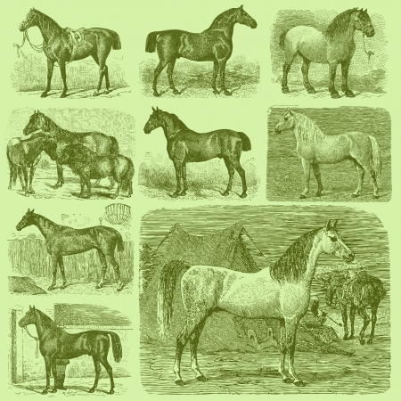 thoroughbred horse: Set of 9 Vintage Engraved Horses Illustration