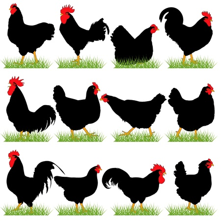 12 Roosters and Hans Silhouettes Set Stock Vector - 17367105