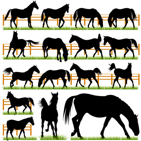 Set of 16 Vector Horses Silhouettes Vector