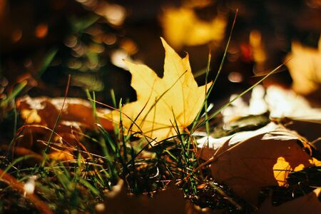 Background texture of colorful autumn leaves in the sunlight