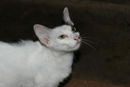 fussy: Cat