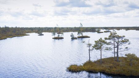 Island with trees in the swamp. Ecological aerial viewr.
