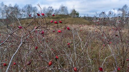 Ancient pagan temple view through the rosehip bush. Worship of pagan Gods and trees. Mystic and magic concept. Stock Photo