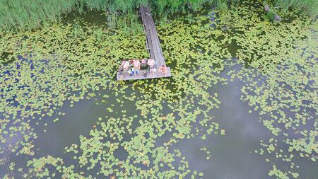 Aerial view of water lilies in a black watered lake seen from above. Several men fishing from the pier.