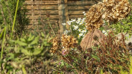 Wildflowers with stone on a bakcground of a wooden fence. Selective focus on dry stalk. Countryside concept. Zdjęcie Seryjne
