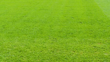 Close-up grass green field football. Beautiful natural background pattern. Sport concept.