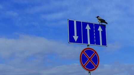 The crow sitting on the road signs of Lane traffic and No parking on the classic blue sky background. Space for text.
