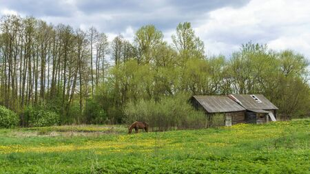 Wooden abandoned traditional Slavic houses and horse in the village in Belarus.