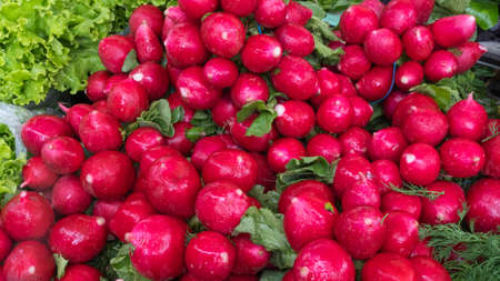 Heap of small red radish with green leaves at the market. Space for text.