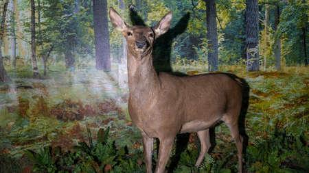 Stuffed deer with long legs and horns. Taxidermy stuffed deer buck. Animal concept.
