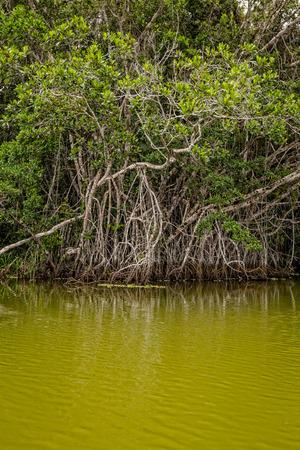 rio amazonas: R�o Amazonas, Ecuador, Am�rica del Sur Foto de archivo