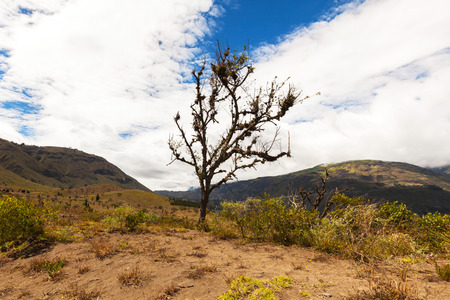 andes mountain: Lonely Tree Growing On Top Of The Andes Mountains, The Longest Continental Mountain Range, South America