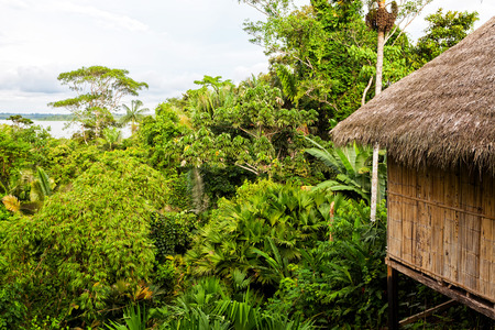 View Of An Eco Loge, Amazon Rainforest, National Park Yasuni, South America Banco de Imagens - 48288790