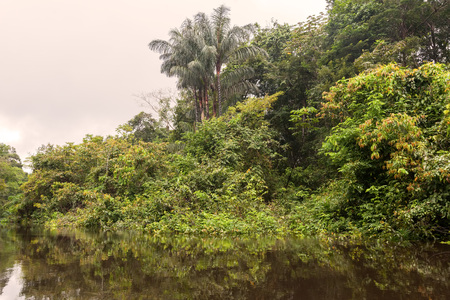 tropical evergreen forest: The Cuyabeno Wildlife Reserve Is The Second Largest Reserve Of The 45 National Parks And Protected Areas In Ecuador