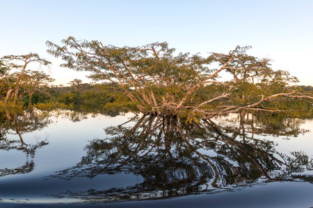 extensive: Mangroves Are Various Large And Extensive Types Of Trees Up To Medium Height And Shrubs