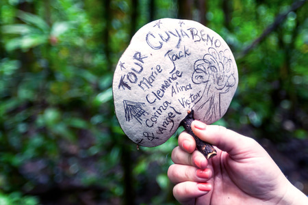 giant mushroom: Giant White Mushroom, Cuyabeno National Park, South America