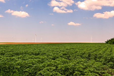 electricity export: Group Of Wind Turbines In Calarasi Used For Production Of Electricity, Romania, East Europe Stock Photo
