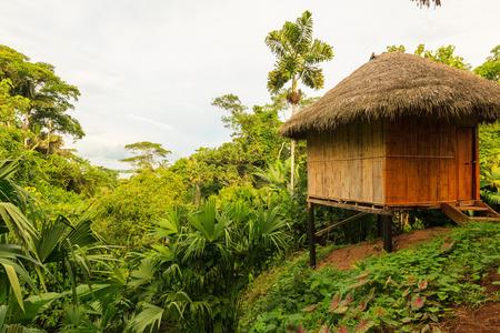 amazonian: Lodge In The Middle Of The Amazonian Jungle, Yasuni Wildlife Reserve