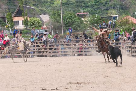 public demonstration: Banos, Ecuador - 30 November 2014: Young Latin Cowboys Chasing A Bull, Public Demonstration In South America In Banos On November 30, 2014 Editorial