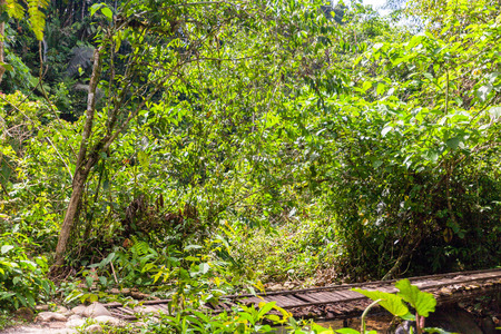 tropical evergreen forest: Plants In The Amazon Jungle, National Park Yasuni, South America