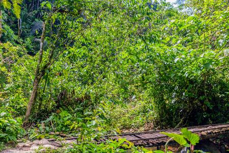 amazonian: Tropical Rainforest In Amazonian Rainforest, National Park Yasuni, South America