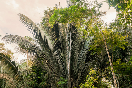 amazonia: Amazon Rainforest, Also Known As Amazonia, Is One Of The Worlds Greatest Natural Resources Stock Photo