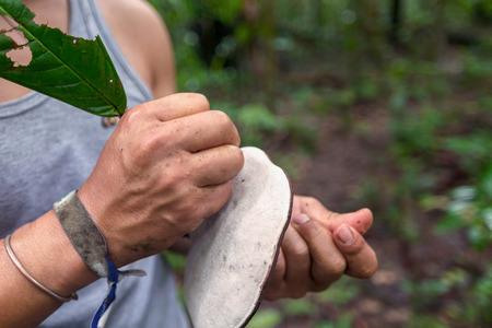 giant mushroom: Indigenous Guide Drawing On A Huge Mushroom, South America