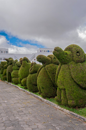 garden features: The Main Attraction In Tulcan, Ecuador, South America Is The Topiary Garden Cemetery Where Features Different Types Of Trees In A Variety Of Exotic Shapes