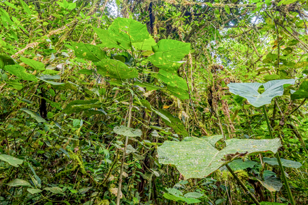wildlife reserve: Tropical Plants From Amazonian Jungle, Cuyabeno Wildlife Reserve, South America