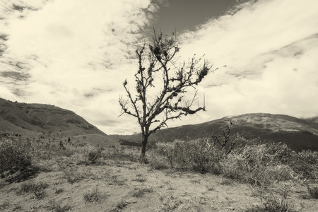 andes mountain: Lonely Tree In The Andes Mountain Range, South America, Monochrome Shot